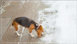 雪の中で遊ぶ愛犬