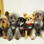 愛犬に暖房対策は必要?犬種別の耐寒差とおすすめ対策は?