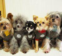 愛犬に暖房対策は必要?犬種別の耐寒の違いとおすすめ対策は?