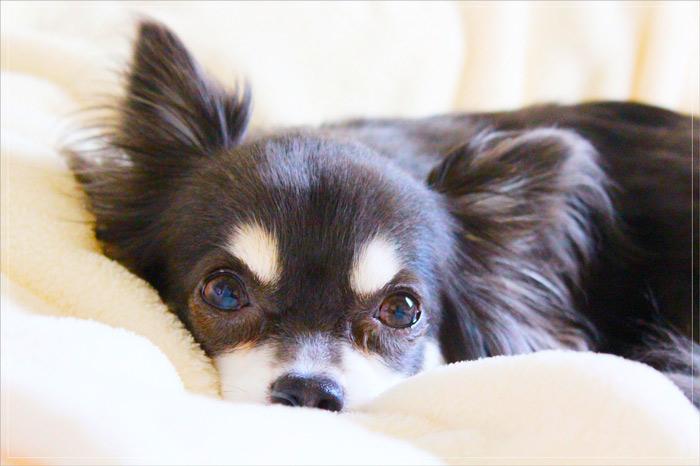 愛犬用の暖房器具でトラブル続出?安全対策のための4つの注意点とは?