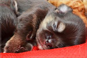 スヤスヤ寝ている愛犬の画像