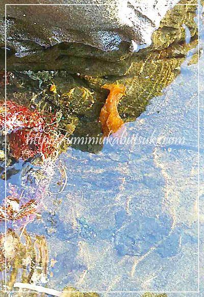 綺麗な水にだけ住むウミウシ