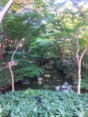 つつじ茶屋から見下ろす小川にかかる「山陰橋」
