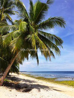 エメラルドグリーンツアーショップ前のビーチでは、砂遊びや貝殻探しで楽しめる。