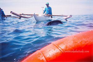 セブ島オスロブの小さな港町で餌付けに成功したジンベイザメツアー。