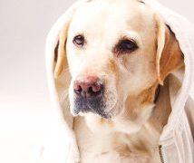 愛犬の花粉症はなぜ気づきにくい?犬の毛に隠された理由と予防法とは?