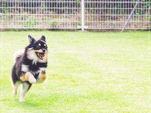 土の上での散歩は愛犬の花粉症予防に繋がります。