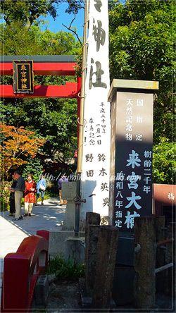 落雷後も成長を続ける樹齢1,300年の第二大楠は来宮神社の鳥居をくぐってすぐ右手にある