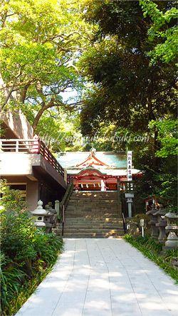 熱海の来宮神社の赤い鳥居をくぐるとすぐに見えてくる、本殿と一層豊かな緑の大木
