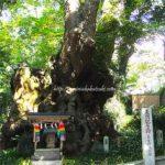 パワースポット熱海の来宮神社、楠の大木への正しい願掛け方法は?