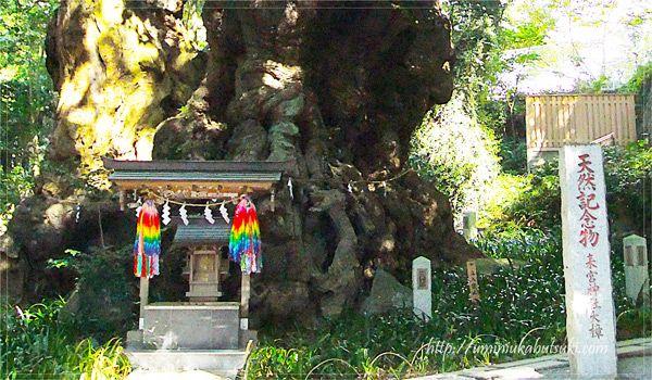 楠の大木で合格成就、熱海の来宮神社は驚異のパワースポット