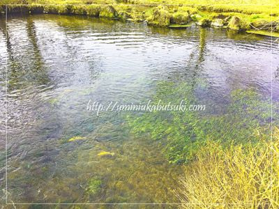 川の流れが反映して美しい六番霊場の濁池