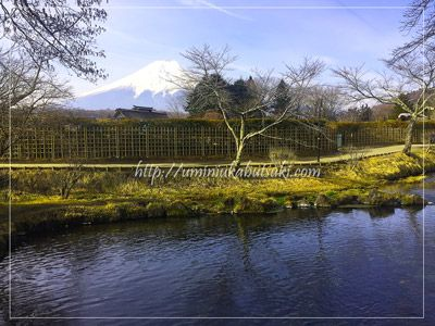忍野八海(oshinohakkai)の「濁池」と富士山の景観