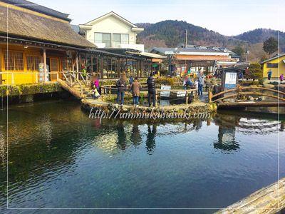 観光客が忍野八海の池の1つと勘違いしやすい人工の中池。