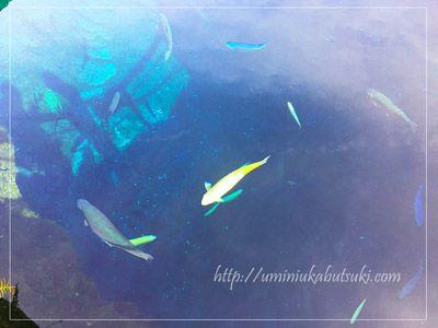 中池を泳ぐアルビノの鱒が金色に輝いている。