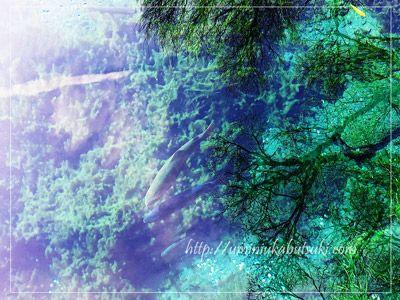パワースポット忍野八海を代表する湧池。湧水量は忍野八海一と言われている。