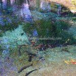 忍野八海おすすめ観光スポット!超穴場の最も青く美しい池はどこ?