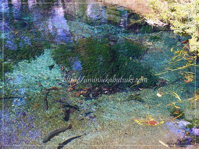 忍野八海には、自然の力でできた一番霊場から八番霊場までの池の他に、人工池がいくつかある。この池は、三番霊場の底抜(そこなし)池の画像。