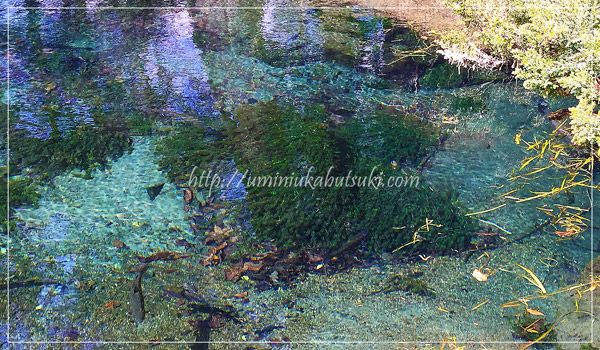 忍野八海の観光で超穴場のおすすめスポット!最も青く美しい池とは?