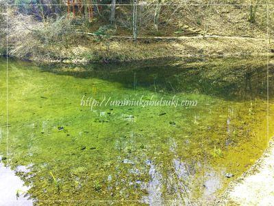 出口池の面積は忍野八海の8つの池の中で最も広い。