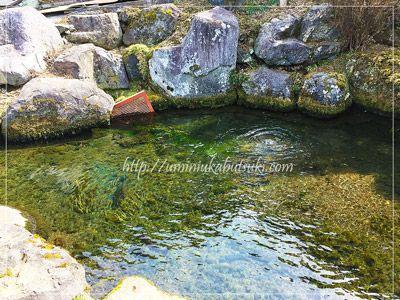 榛の木林民族資料館敷地内に設けられた池では、富士の霊水が勢いよく湧き出している。