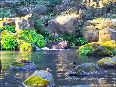 「あずまや」の横にある滝や水分石(みずわけいし)などが楽しめる場所では、水鳥が優雅に泳いでいる。