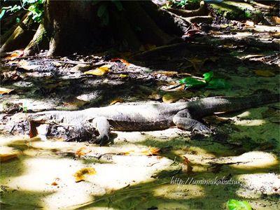 熱帯大自然ならではの野生動物に出会えるコタキナバルのサピ島。
