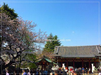 浅草神社の桜の開花状況は3~5部咲きと言ったところ。