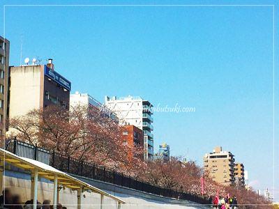 隅田公園の桜の満開は、今週半ばと言ったところ。