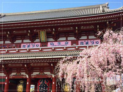 「宝蔵門(仁王門)」のしだれ桜は満開を迎えたばかりで花が強く、今が一番の見頃。