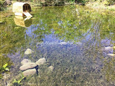 ギャザリア・ビオガーデン入り口を入るとすぐに見えるビオトープの池。