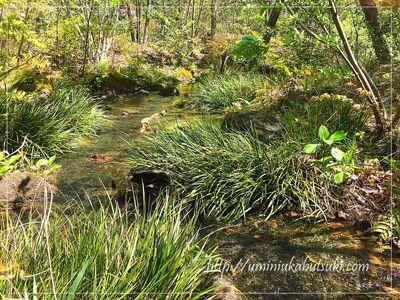 まるで田舎の山道を散策している気分になれるビオトープの小川。