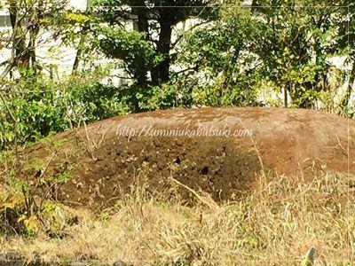 ギャザリア・ビオガーデンではカワセミが巣作りできるように土が盛ってある。