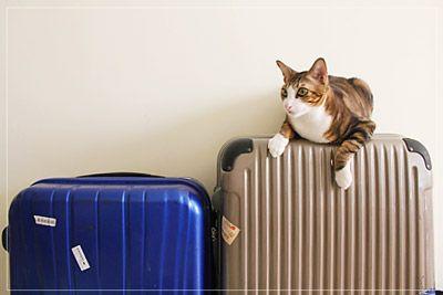夏休みに親子留学を検討する場合は、ゴールデンウィークから探し始めるのがおすすめ。