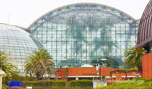 雨の日に東京都夢の島熱帯植物園にお出かけしたら意外に大人も遊べた理由をご紹介