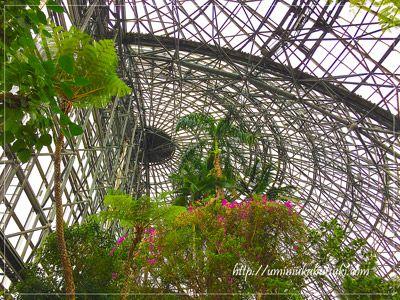 大温室の建物全体がガラス張りになっているので、自然光の中で観られる巨大植物は圧巻。