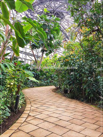 夢の島熱帯植物館での巨大な温室や館内の冷暖房などは、ゴミ熱焼却で作られる莫大なエネルギーを利用している。