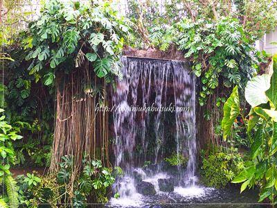夢の島熱帯植物園の巨大ドームに入ると、豪快な滝が出迎えてくれる。