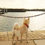 愛犬の防災対策はできている?非常時に用意すべきグッズとは?