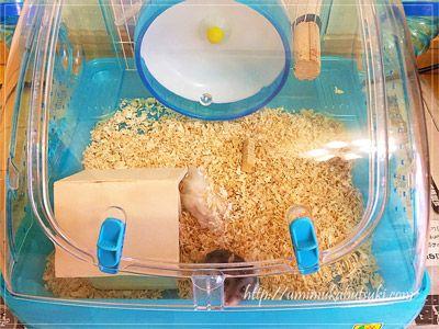 おすすめのケージは、掃除がしやすいこと。ハムスター初心者用飼育セットが分かりやすい。