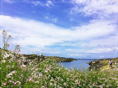 春の花が咲きほころぶ城ヶ島の長津呂の磯。
