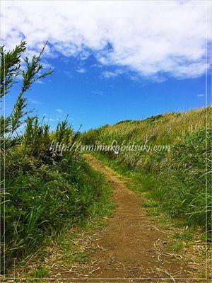 城ヶ島西側から馬の背洞門まで続く山肌の小道は、小動物に会えそうなワクワクする散歩道を歩ける。