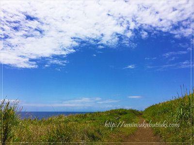 城ヶ島の山肌に続く小道は、空が近くて海がはるか彼方に広がる景色が見られる。