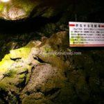 関東の穴場な避暑地!青木ヶ原にある人気の洞窟「富岳風穴」とは?