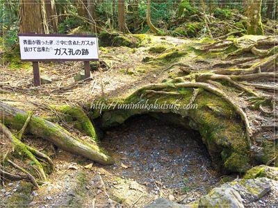 ひにゃりとした樹海は関東地方の避暑地の1つ。