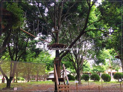 地上から3mほどの高さにある、こもれび森のイバライドのアスレチック。