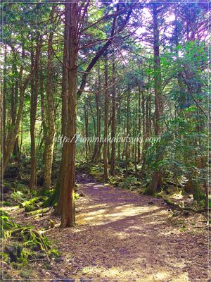 青木ヶ原の樹海は少し踏み込んだだけで静けさに包まれる。