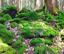 関東の【日帰り避暑地】に驚きの森が上昇中?今密かに人気な森林探検とは?