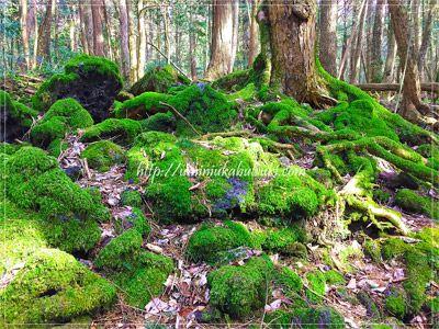 溶岩流の上を覆いつくす濃い緑色の美しい苔が、さらに避暑地の雰囲気を醸し出す。