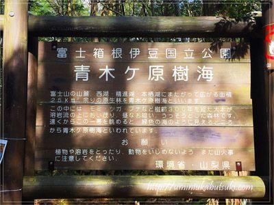 青木ヶ原樹海の中に整備された東海自然歩道は、関東から日帰りで行ける避暑地に最適。